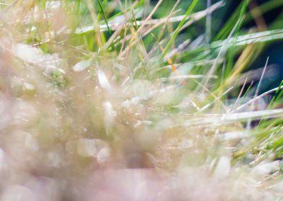 Sundressed grass