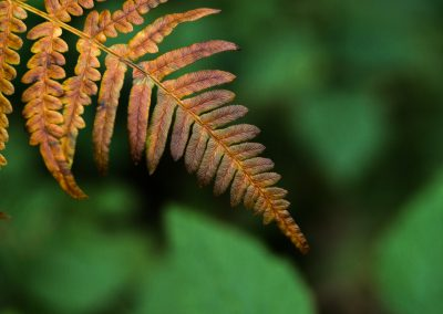 The ferns have started dressing for autumn (Edge 50, untilted)