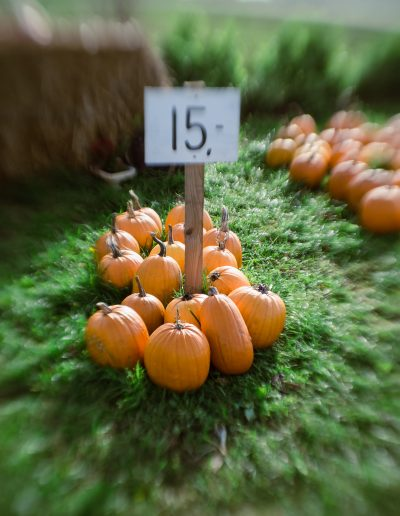 Danish pumpkin self-service. Photo: Birgit Fostervold