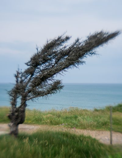 Weather shaped tree. Lensbaby beta lens, Denmark 2019