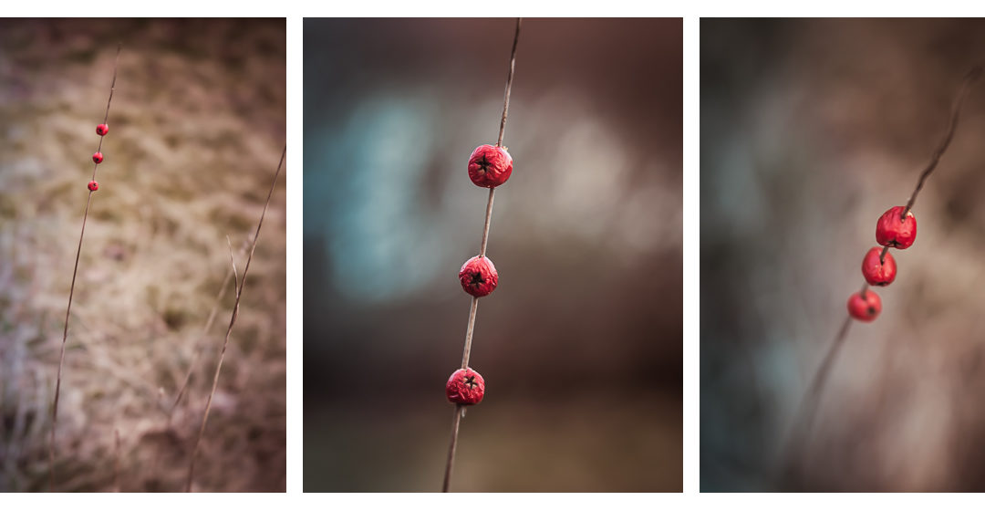 Just a tiny triptych